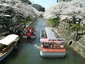 桜満開の松川遊覧船のりば2